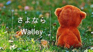 walleyサービス終了のお知らせ